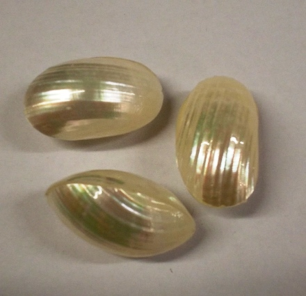 Mother Of Pearl Hollow Oval